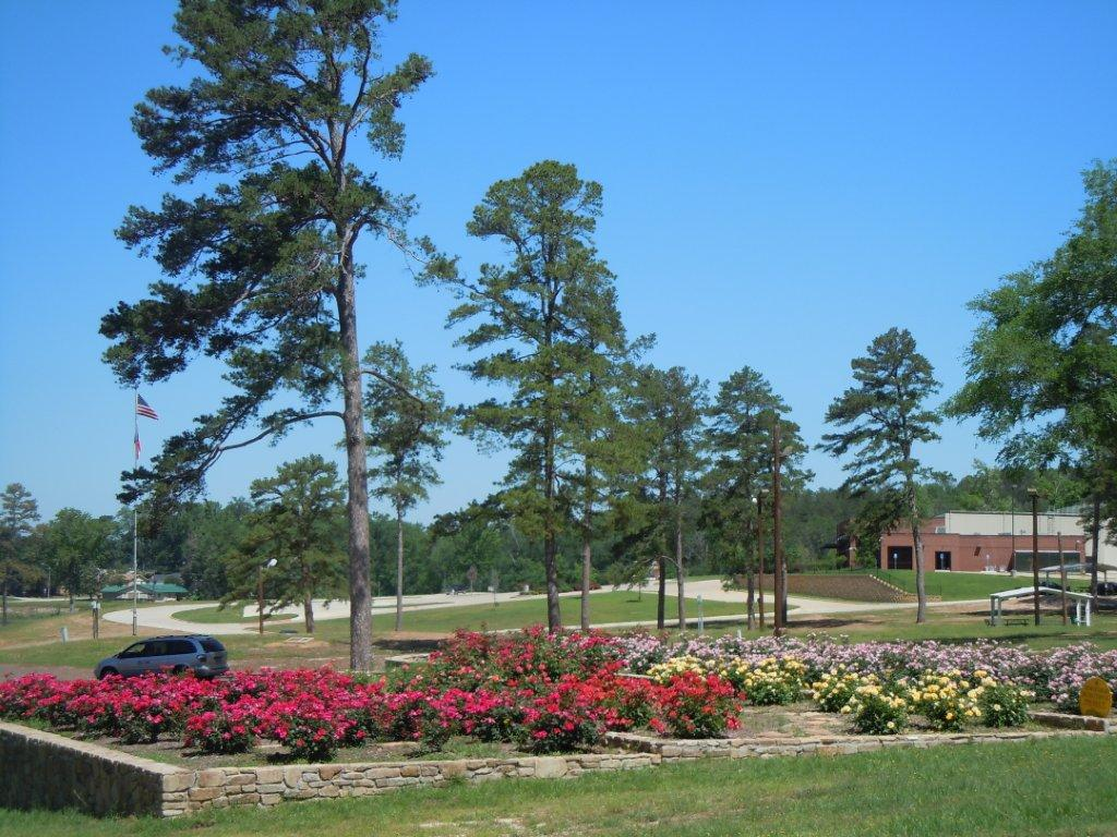 Rosebushes at Lake Forest KHP.jpg